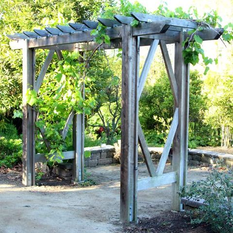 diy trellis ideas