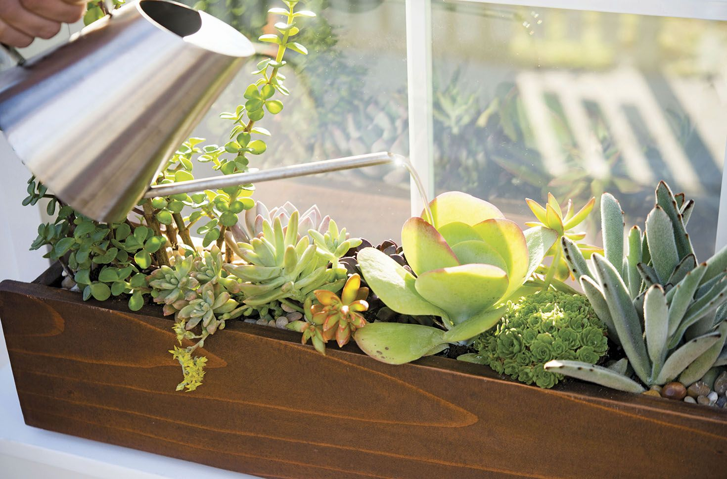 How To Make A Succulent Window Box Window Box Plants