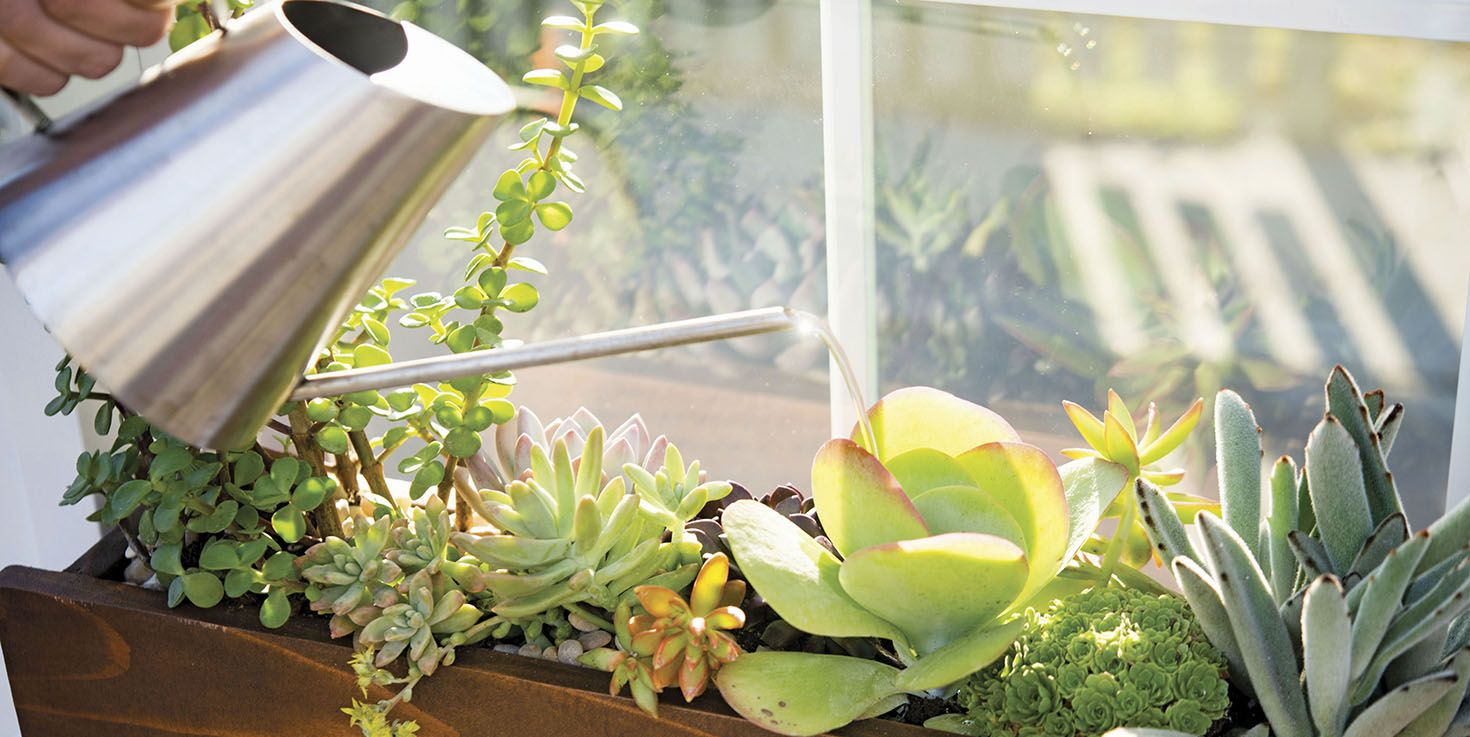 how to build a succulent window box
