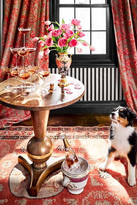 Red, Table, Interior design, Room, Pink, Canidae, Dog, Curtain, Tablecloth, Textile,