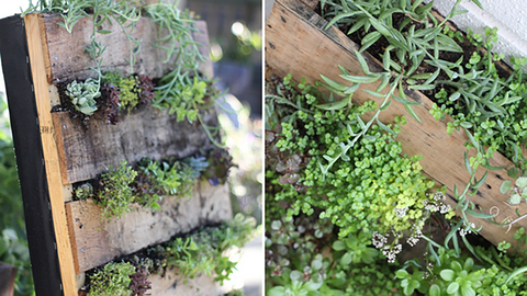 Plant A Vertical Garden