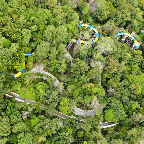Aerial photography, Vegetation, Bird's-eye view, Biome, Photography, Plant, Groundcover, Tree, Landscape, Forest,