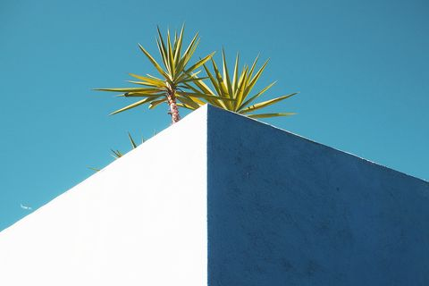 Blue, Green, Daytime, Sky, Tree, Azure, Turquoise, Plant, Palm tree, Arecales,