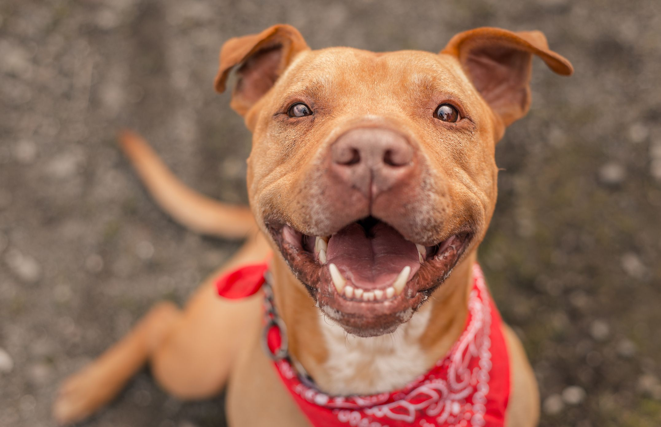 Do Dogs Smile? Here's What's Really Behind That Goofy Grin