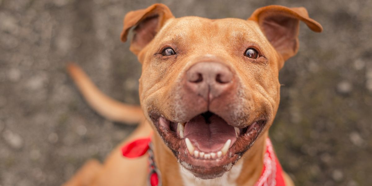 Do Dogs Smile? — Reasons and Meanings Behind Dogs' Smiles