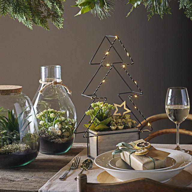 dobbies garden centre christmas plant range