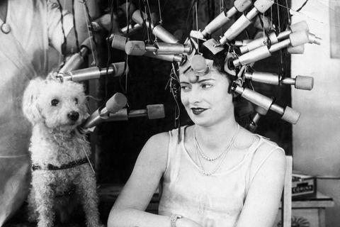 vintage beauty regimen woman and pet poodle receiving hair treatments woman and pet poodle receiving hair treatments