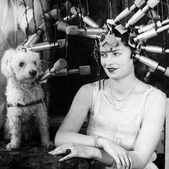 vintage beauty regimen woman and pet poodle receiving hair treatments