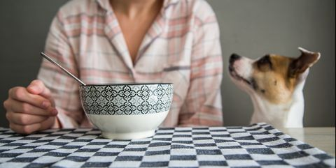 Funny cute dog in table during breakfast time.