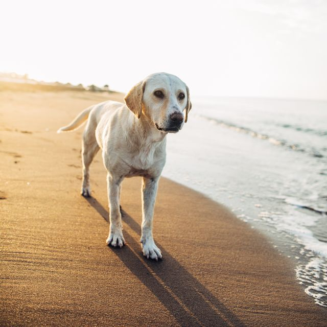 best dog friendly beaches in the uk