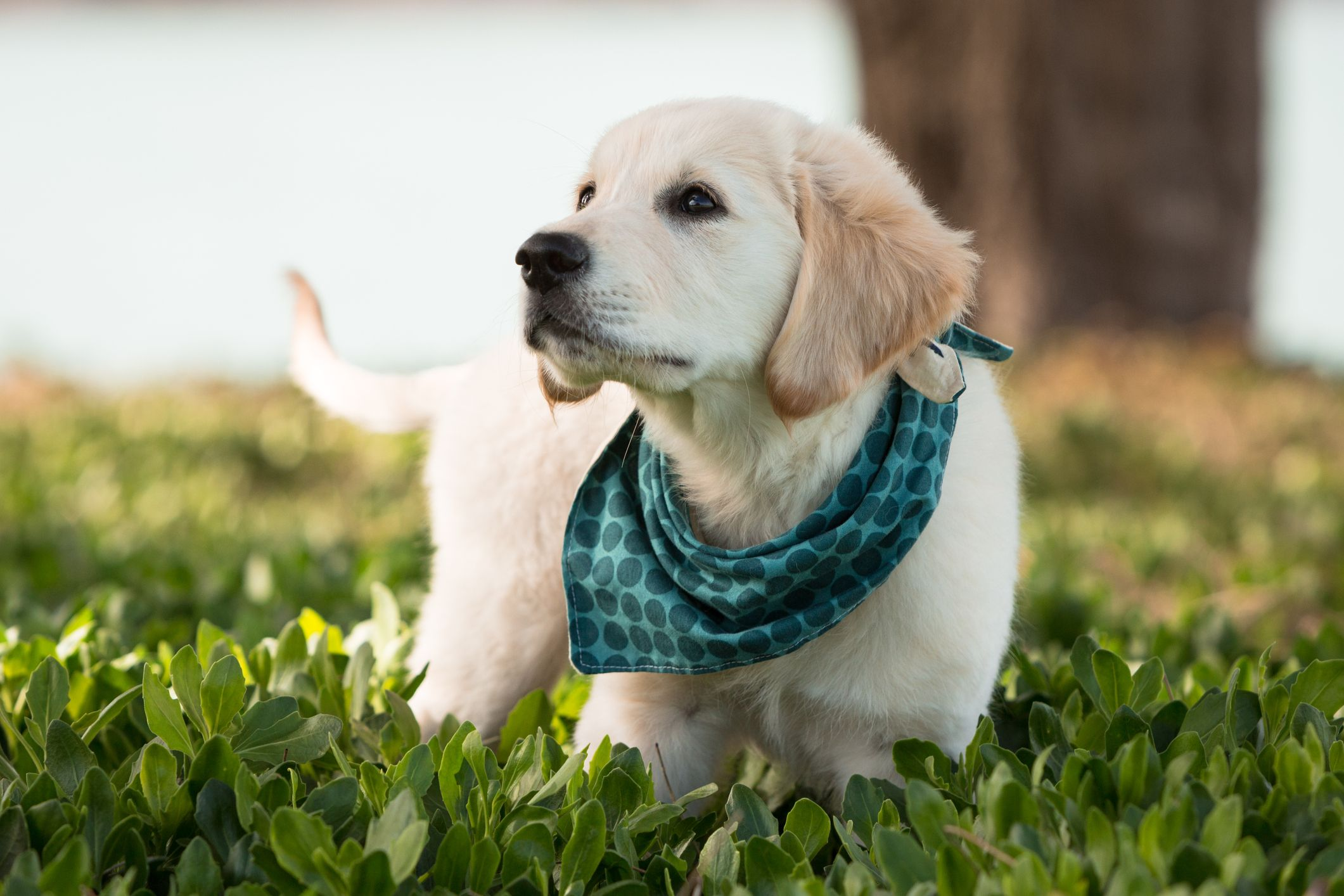 Dog Bandana Blue Flower Dog Bandana Puppy Bandanas Dog Clothes Dog Scarf Dog Bandana Collar Dog Accessories Gifts for Dogs
