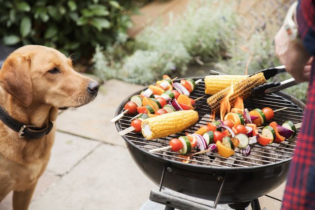 labrador dog looks interested at food on barbecue
