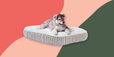 Dog, Canidae, Dog bed, Dog breed, Puppy, Companion dog, Carnivore, Dog supply, Australian shepherd, Pet supply,