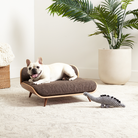 White, Furniture, Room, French bulldog, Canidae, Tree, studio couch, Comfort, Cat, Table,