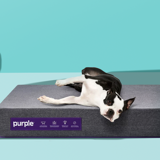 16 Best Dog Beds In 2019 Top Rated Beds For Small And