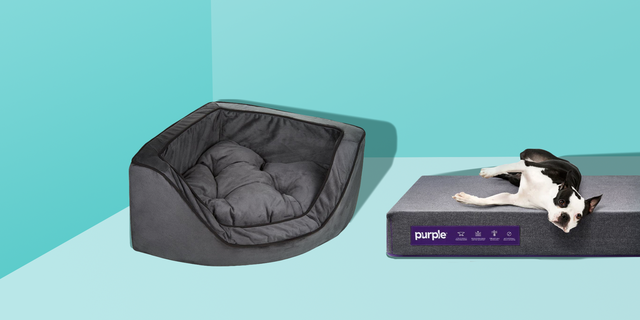 16 Best Dog Beds In 2020 Top Rated