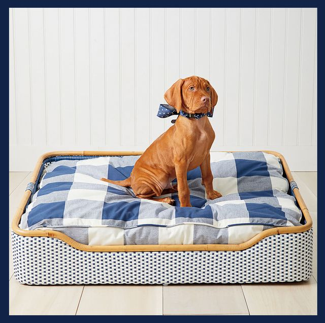 9 Luxury Dog Beds Best, Fancy Dog Beds Furniture