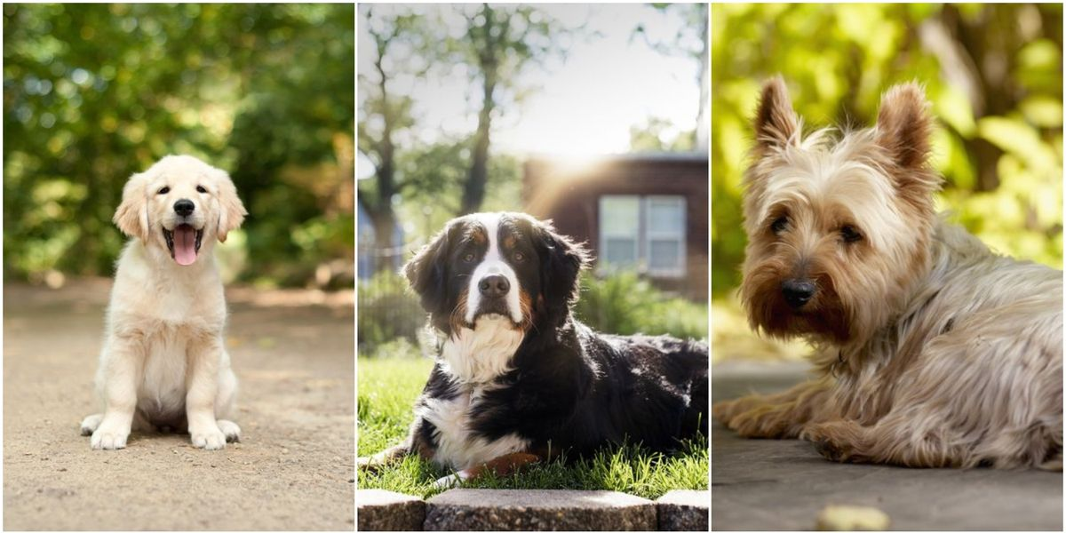 8 dog breeds perfect for first-time owners