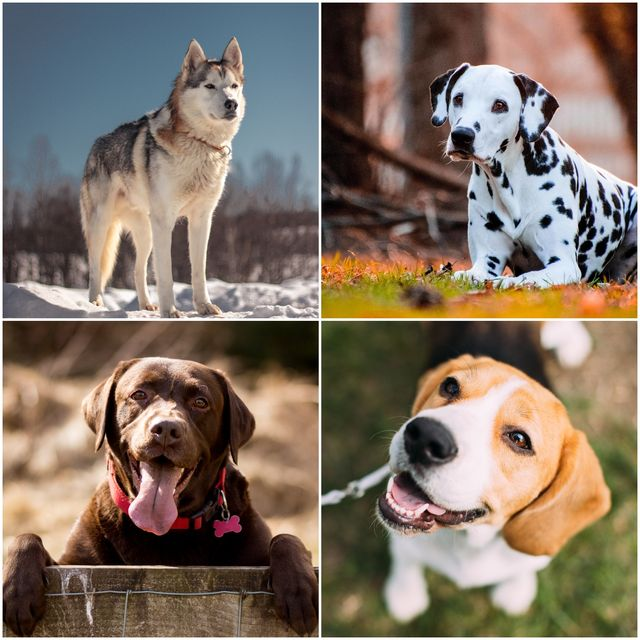 Top 14 Dog Breeds for Reducing Stress in Owners