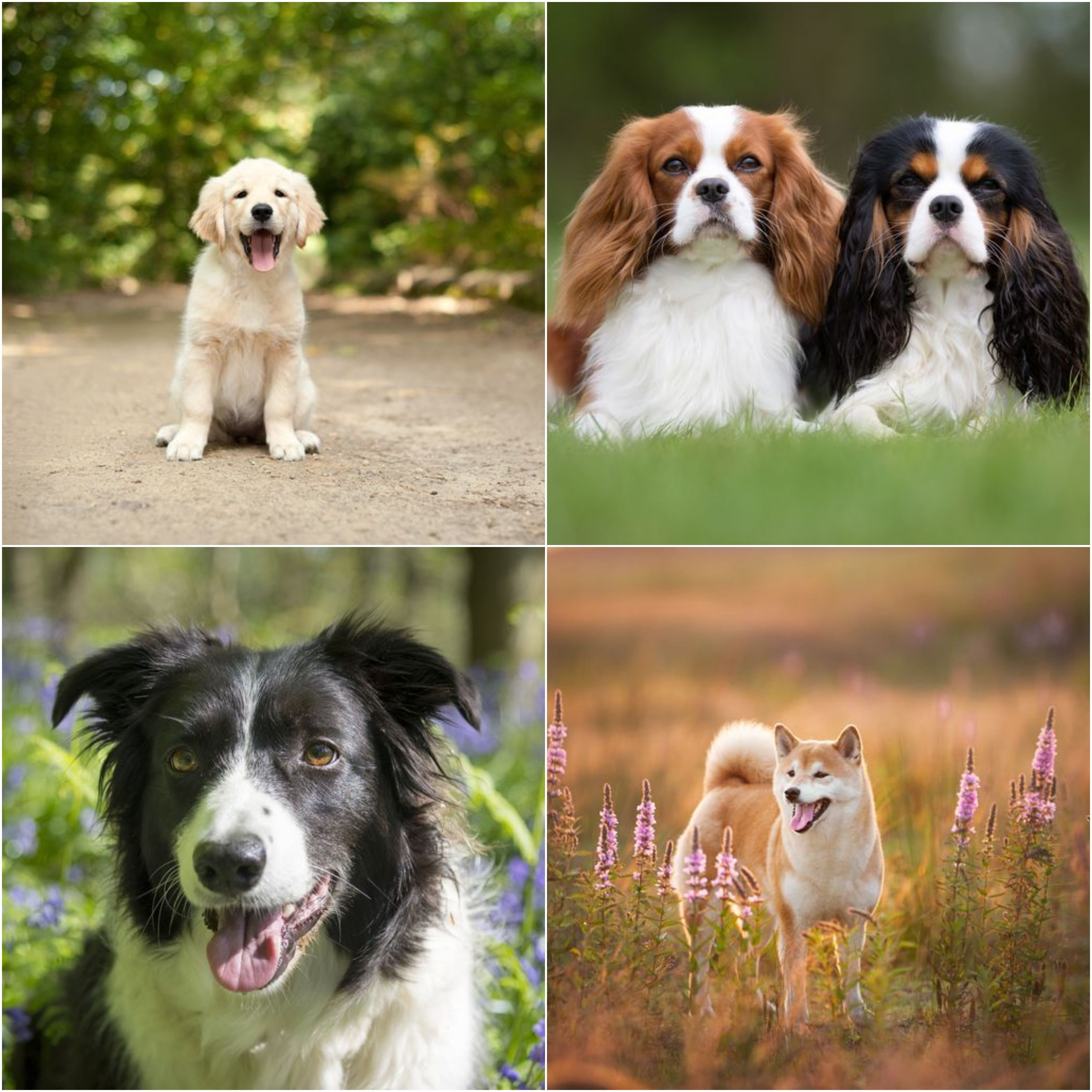 The Best Dog Breed For Your Star Sign