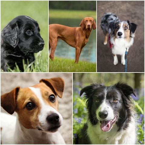 Adventurous dog breeds