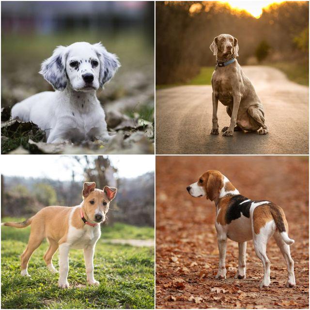 dog breeds that love an autumn walk