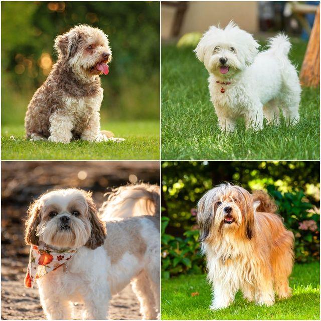 best dog breeds for city living