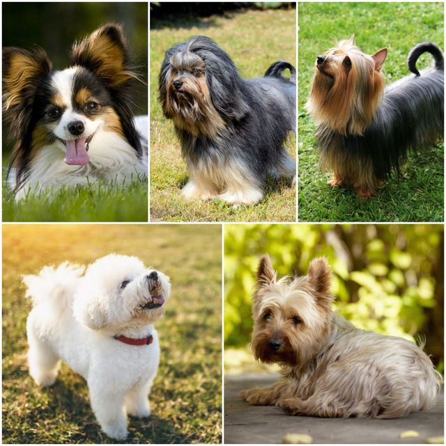 5 dog breeds that love spending time at home
