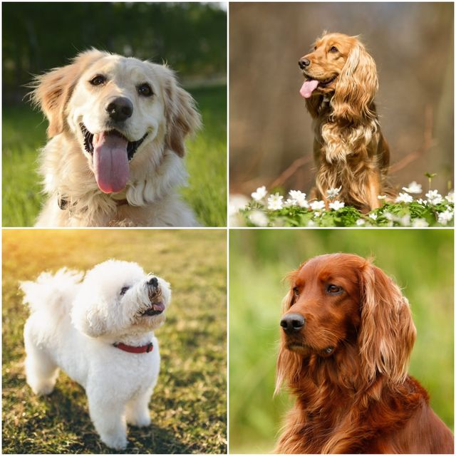 dog breeds with positive personalities
