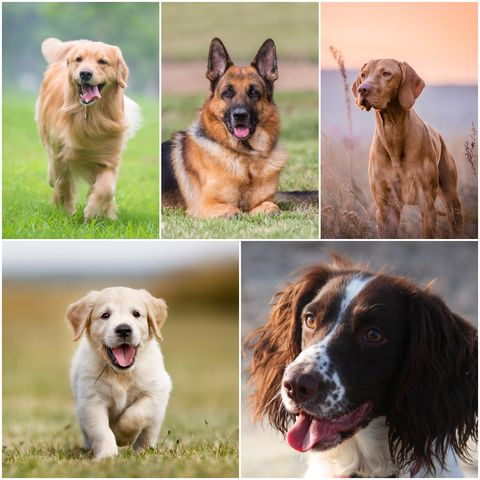 Dog breeds that need walking more than others