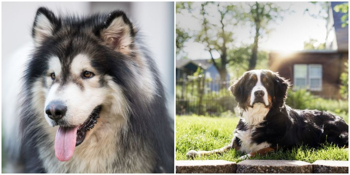 4 dog breeds you should never walk in the sun