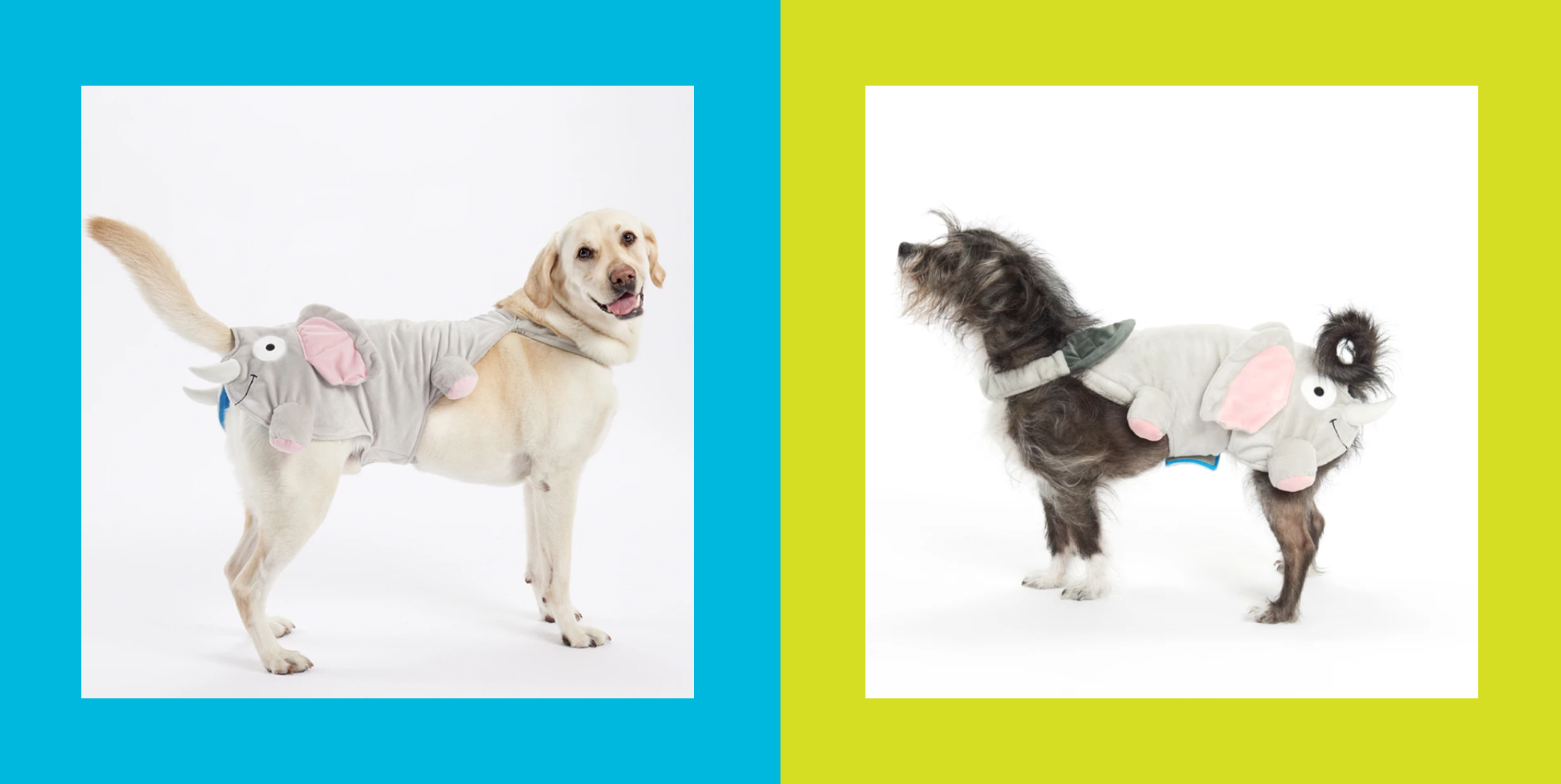 Please Feast Your Eyes on This Halloween Costume for Your Dog's Butt