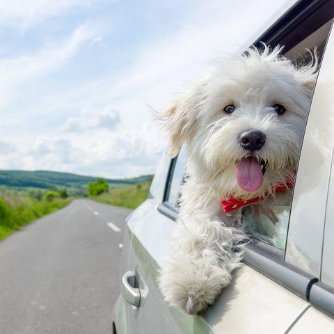 42 Best Dog Instagram Captions Cute