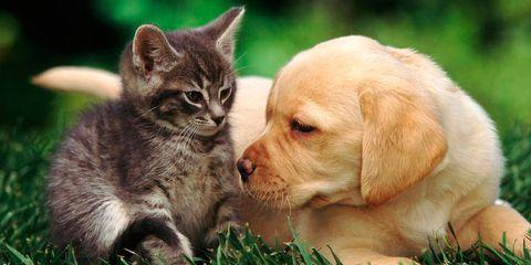 Mammal, Vertebrate, Cat, Dog, Canidae, Carnivore, Felidae, Puppy, Dog breed, Kitten,