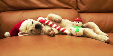 Dog, Canidae, Pug, Puppy, Bulldog, French bulldog, Fawn, Non-Sporting Group, Stuffed toy, Sporting Group,
