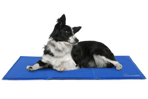 Dog cooling mat - Pecute - Amazon