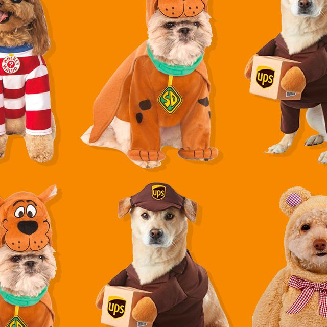 Halloween 2020 Dogs 36 Funniest Dog Halloween Costumes 2020