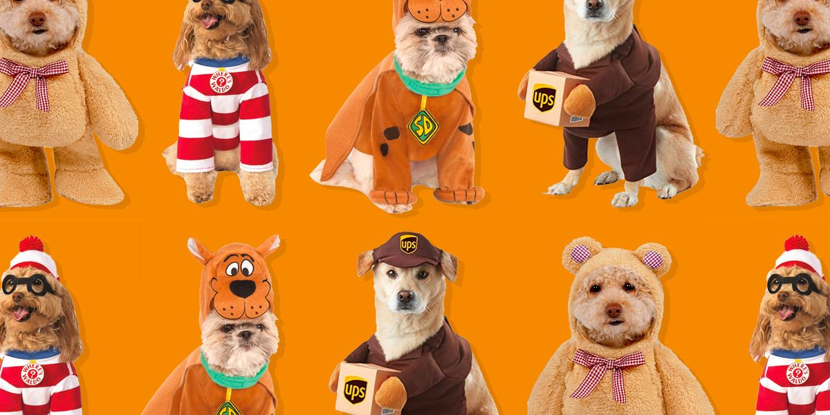 Tiny Dog Halloween Costumes.36 Funniest Dog Halloween Costumes 2020
