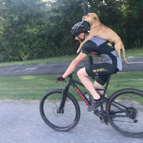 Cyclist Rescues Puppy