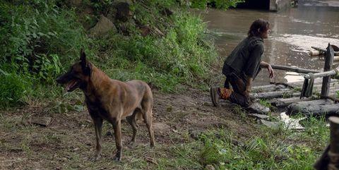 Walking Dead perro Daryl