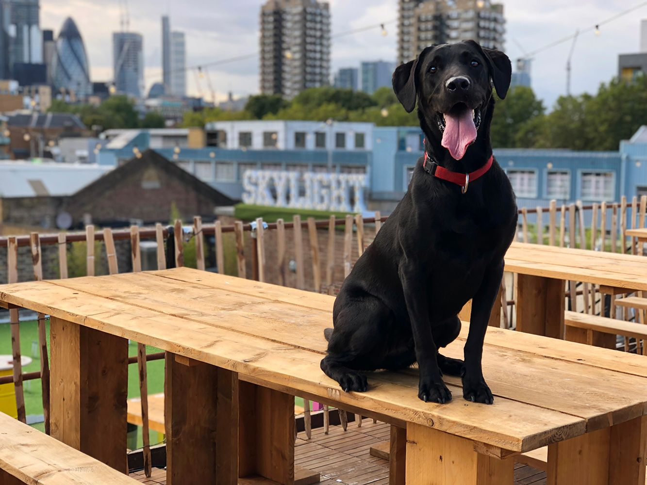Dog Day at Skylight,London