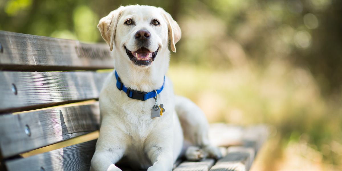 12 Dog DNA Tests To Help You Learn Your Dog's History