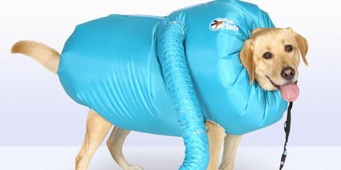 Dog clothes, Dog, Canidae, Dog breed, Companion dog, Outerwear, Puppy, Raincoat, Snout, Sporting Group,