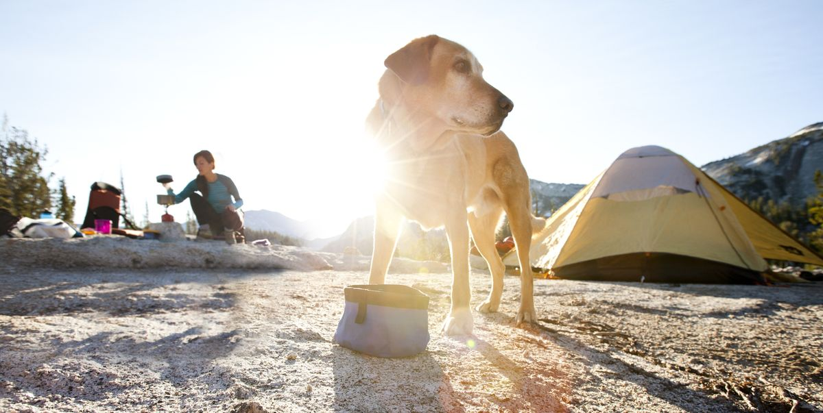 15 Smart Ideas for Camping with Dogs