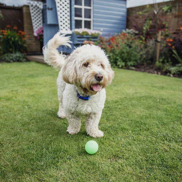dog friendly airbnb
