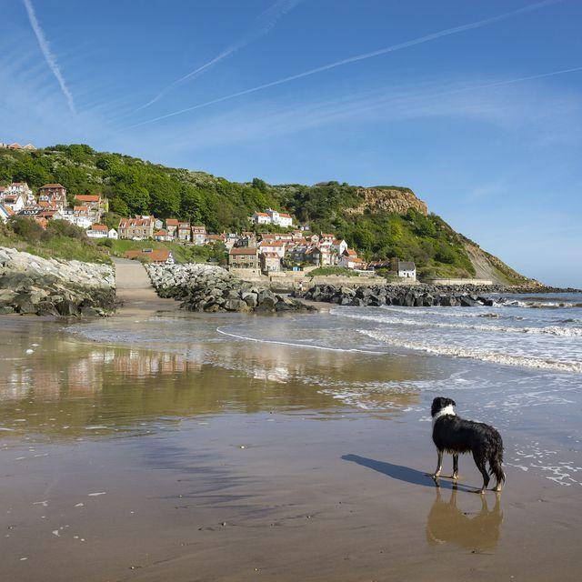 dog friendly beaches uk