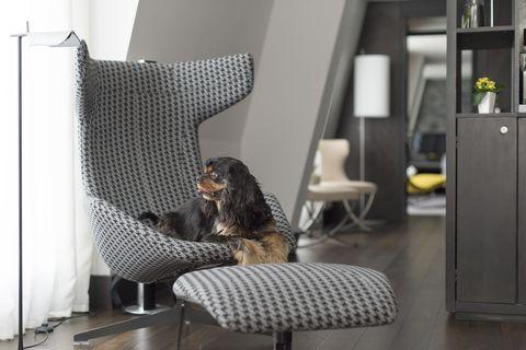 dog friendly hotels in london