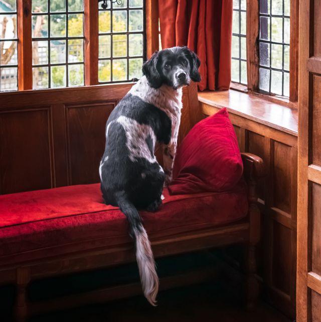 dog friendly hotels norfolk