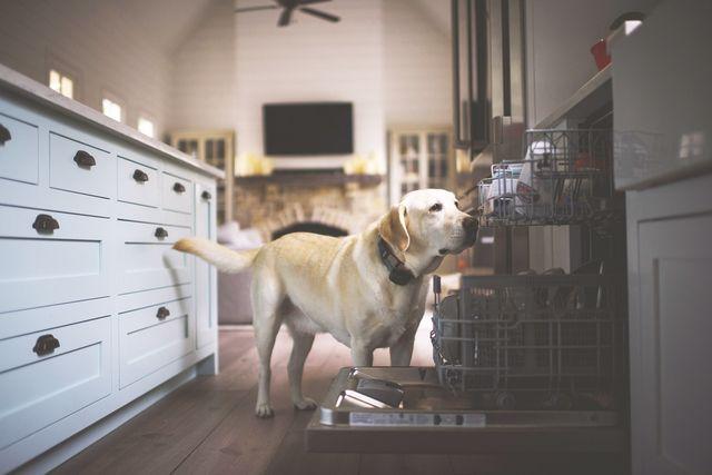 dog friendly kitchen
