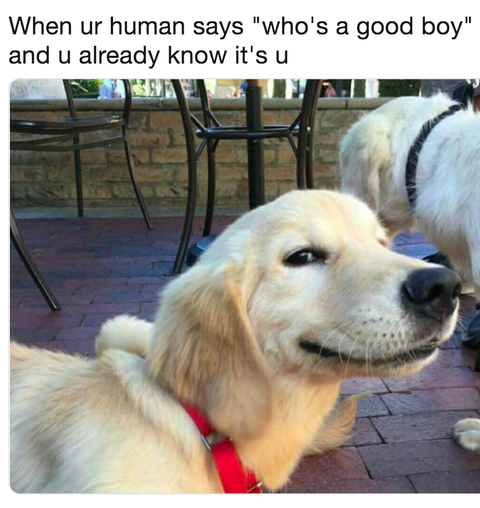 28 Funniest Dog Memes - Best Viral Dog Jokes and Pictures